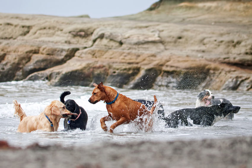 A group of different dog breeds playing together in water