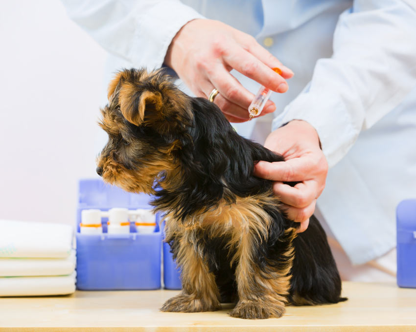 Puppy injections information uk