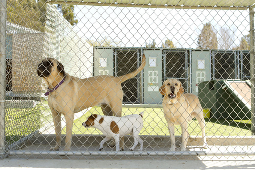 Dog Kennels holiday