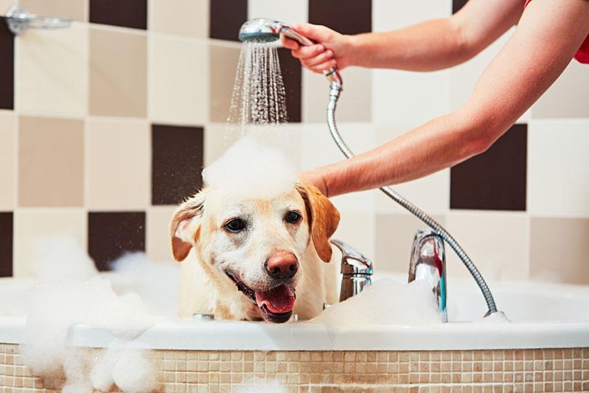 Dog bath shower