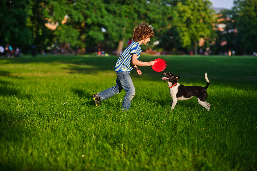 Dog playing with boy frisbee in the park