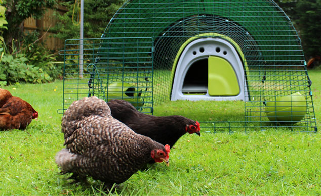 A green Eglu Classic Chicken Coop looks great in the garden and your chickens will absolutely love it