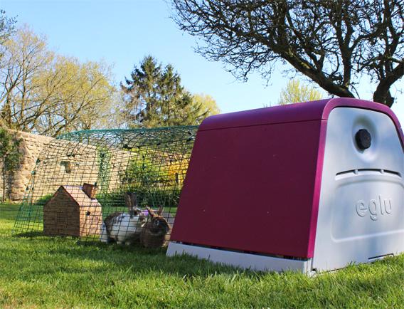 Zwei Kaninchen im Auslauf des lilafarbenen Kaninchenstalles
