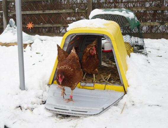 The skirt keeps your chickens safe inside