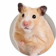 hamsters gerbils omlet. Black Bedroom Furniture Sets. Home Design Ideas