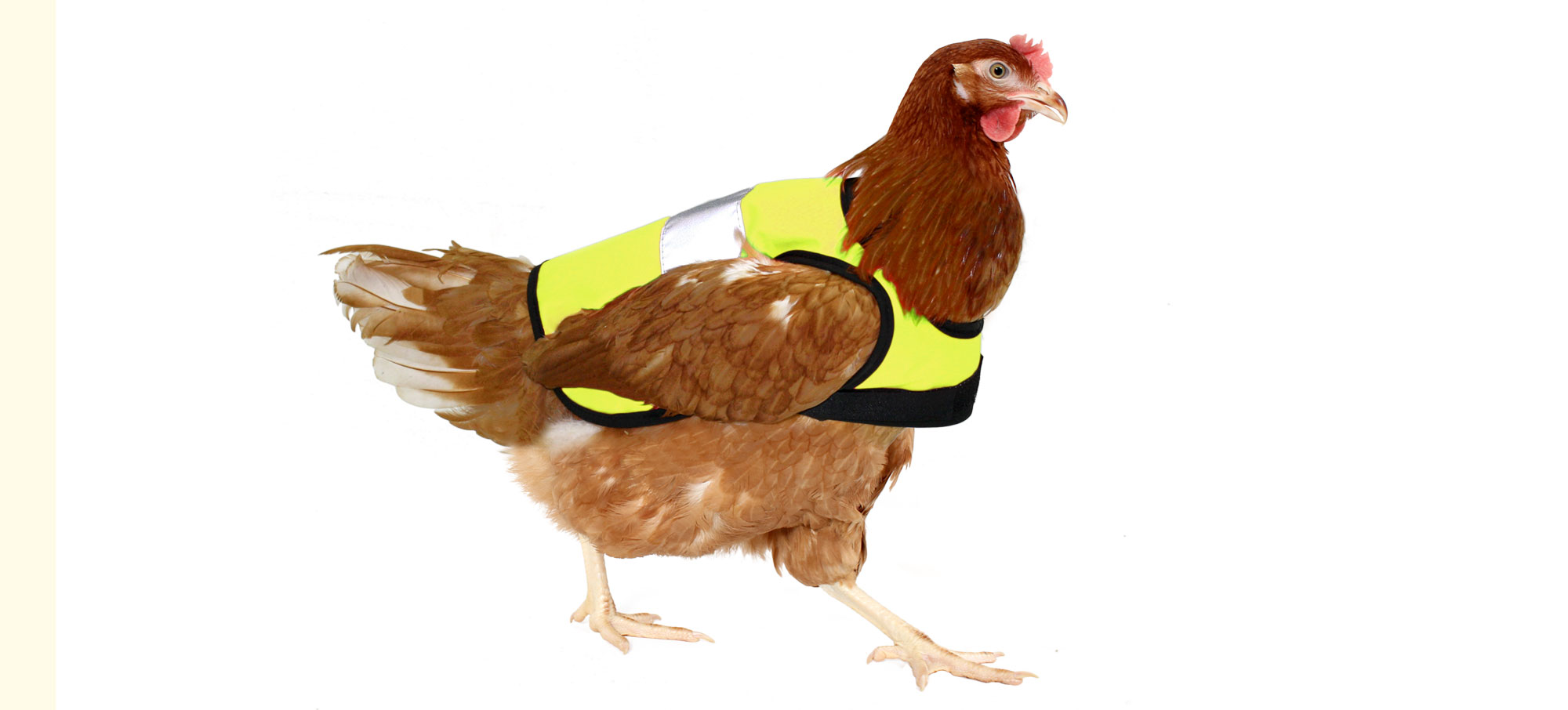 High-Vis Chicken Jacket | Chicken Coops and Pet Chicken Accessories ...