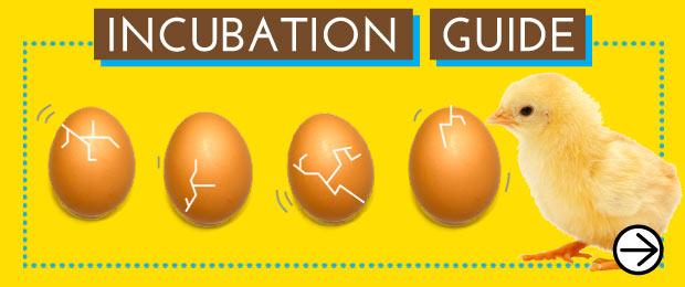 Incubation Gui
