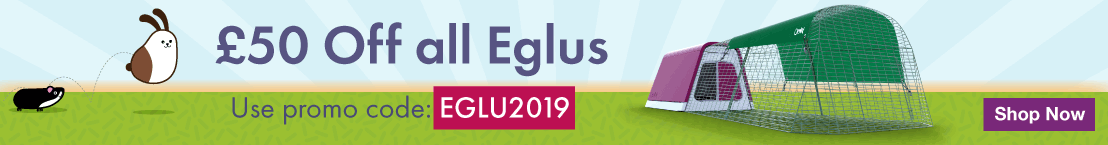 January Eglu Promotion