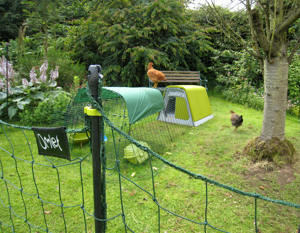 The Omlet fencing allows your hens to explore a little more of your garden but keeps them out of the flower beds