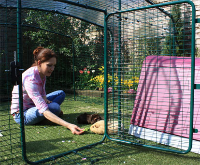 The Lo-Rise Outdoor Guinea Pig Run has a large door, giving easy access to your pet guinea pigs.
