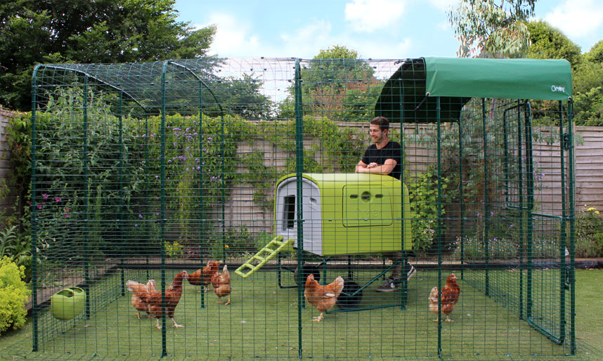 Keeping Your Chickens Safe From Predators Chicken Care