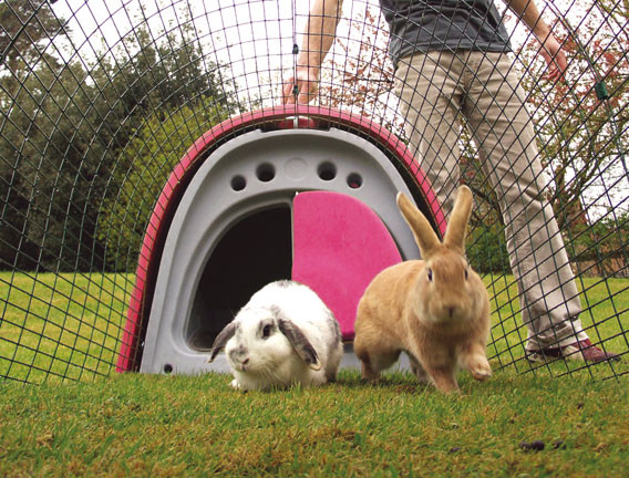 Rabbits inside the run of an Eglu Classic Rabbit Hutch.