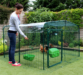 Omlet walk in chicken run with clear roof cover.
