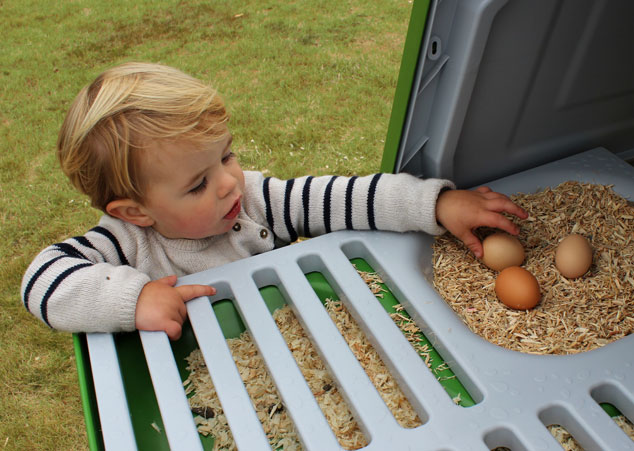 Collecting eggs from the Eglu Go UP chicken house.