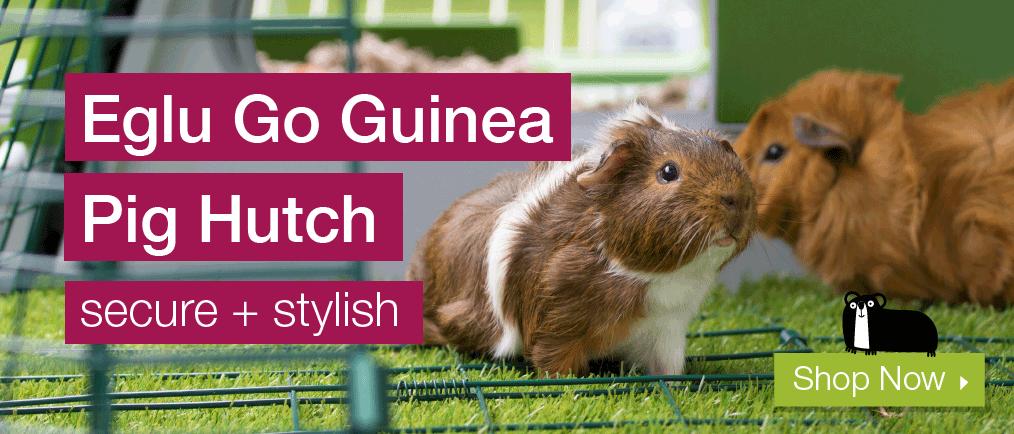 Guinea Pig Eglu Go Banner