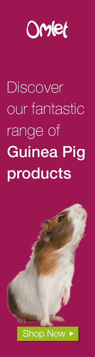 Guinea Pig Product Banner
