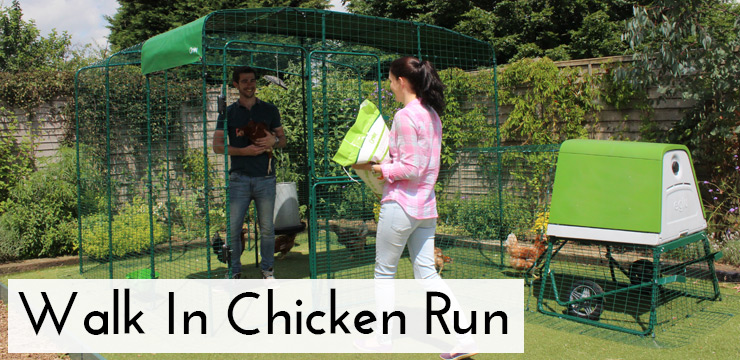 Man in Walk In Chicken Run admiring his chickens