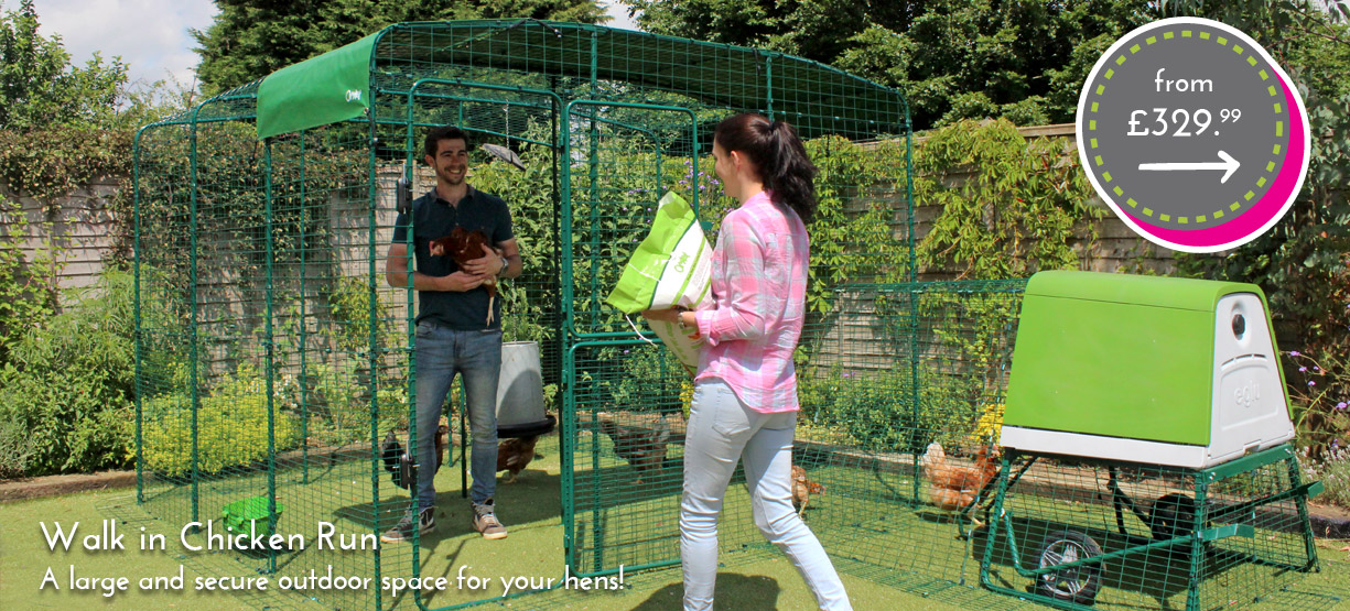 The Walk in Run for Chickens gives your hens plenty of secure space to roam