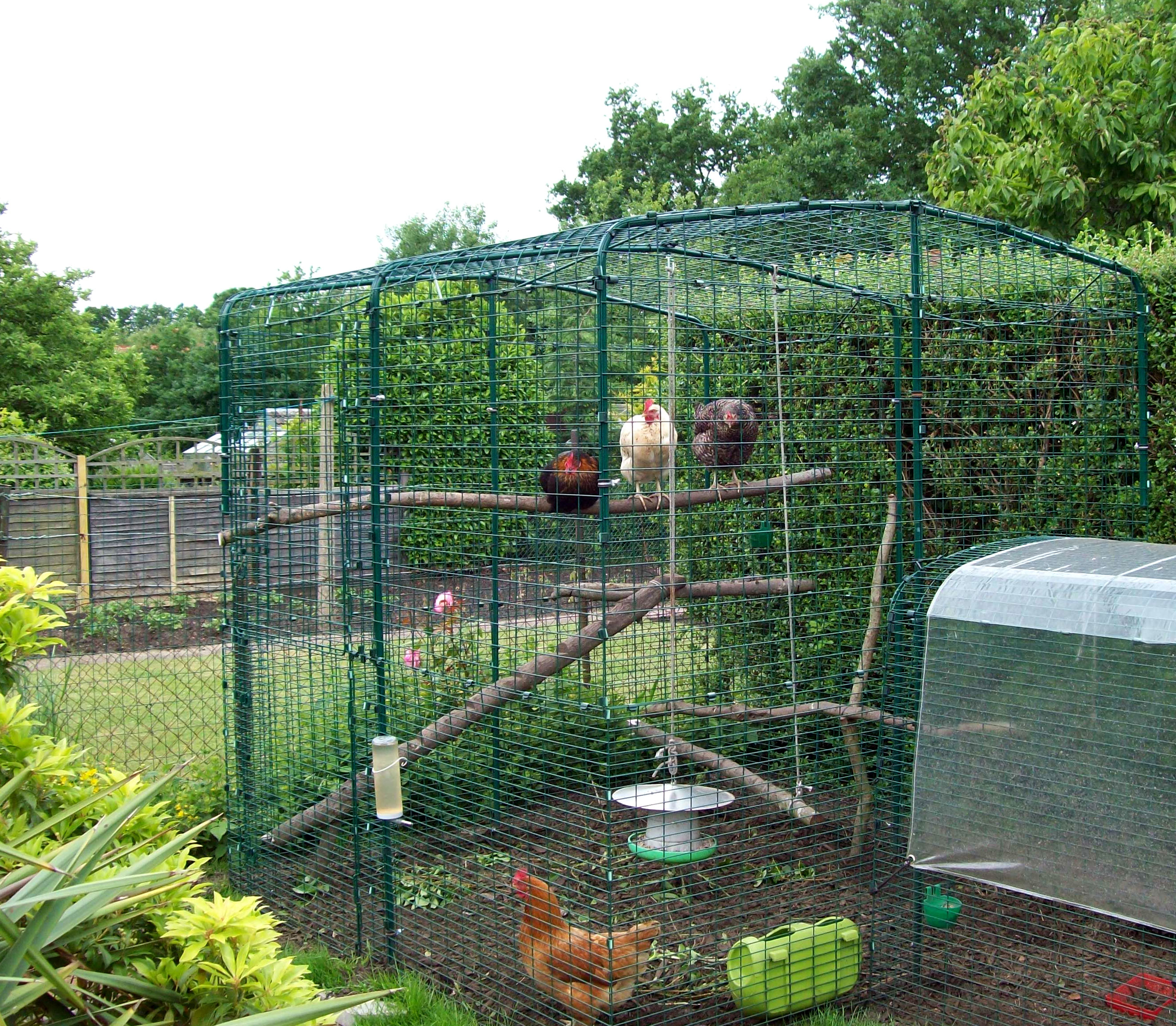 Reviews for walk in chicken run chicken keeping omlet for Chicken enclosure ideas