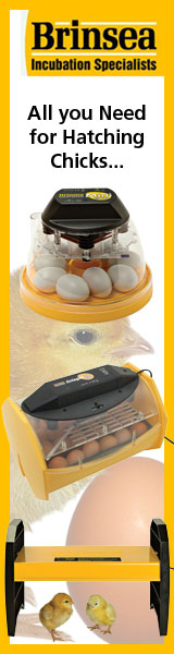 All you Need for Hatching Chicks...