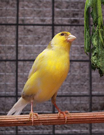 canary fresh food