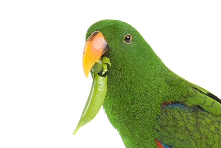 what vegetables can parrots eat