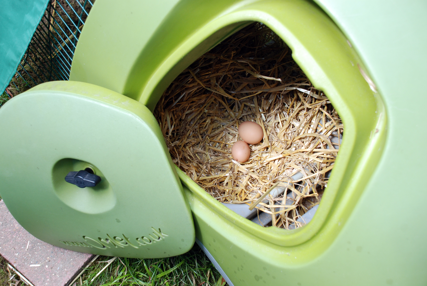 Fiona Watkins loves collecting her fresh eggs from her Eglu in the morning