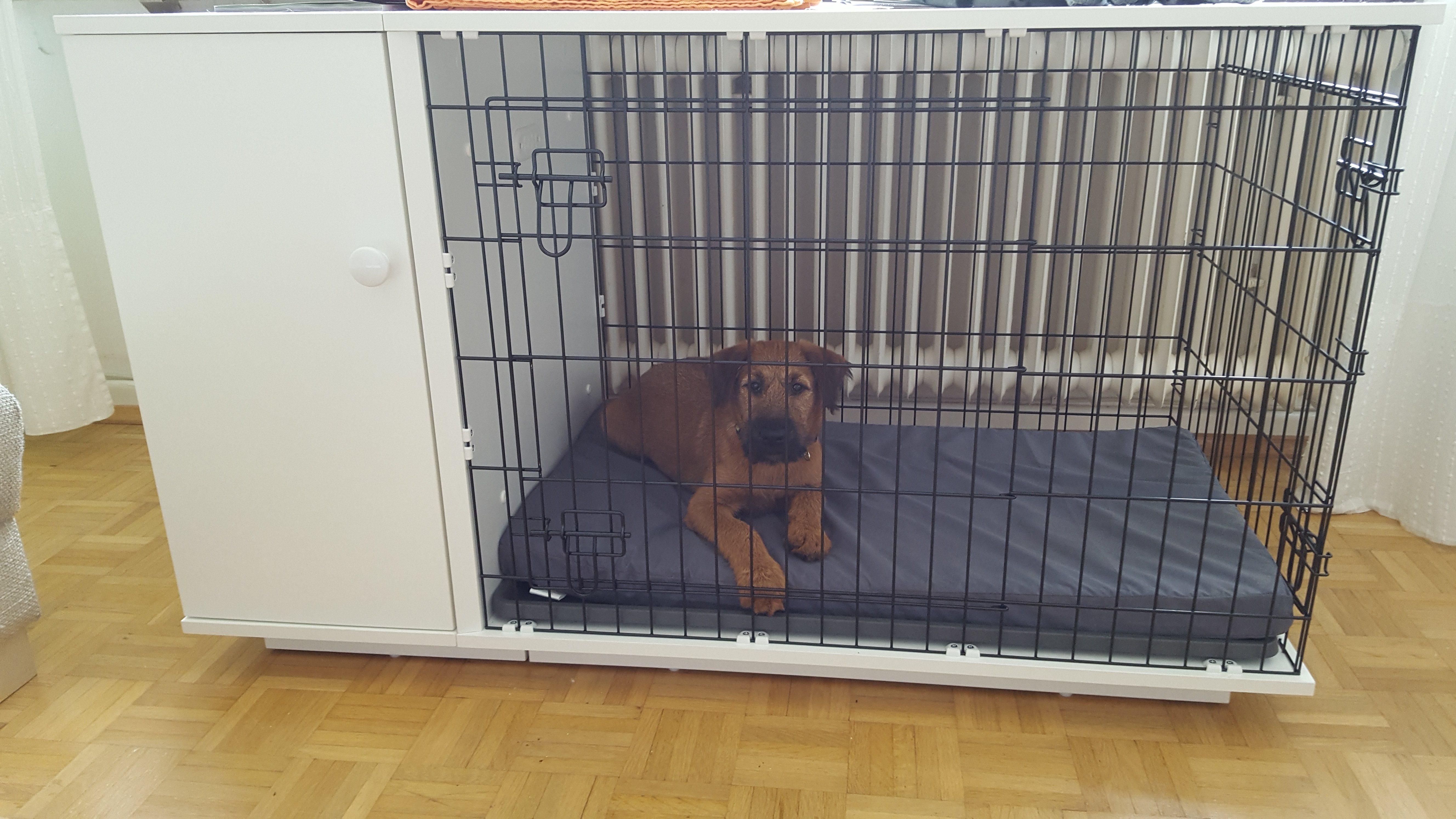 new fido studio dog crate  dog products  omlet - irish terrier
