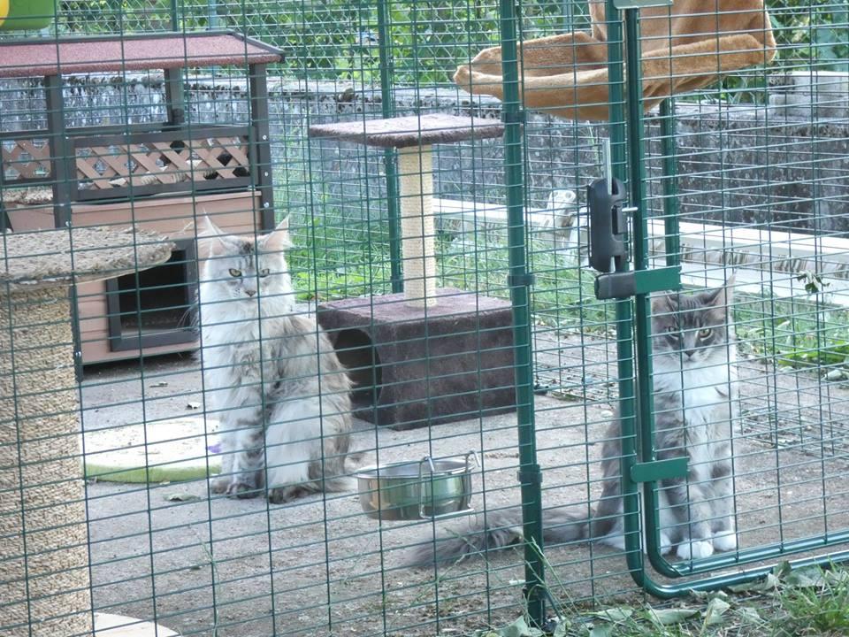Outdoor Cat Run   Large Spacious Outdoor Cat Enclosure