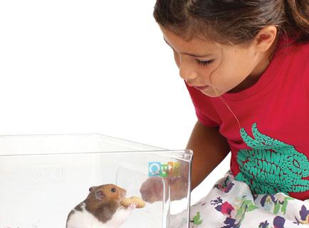 hamster-dans-le-bac-en-plastique-de-la-cage-qute