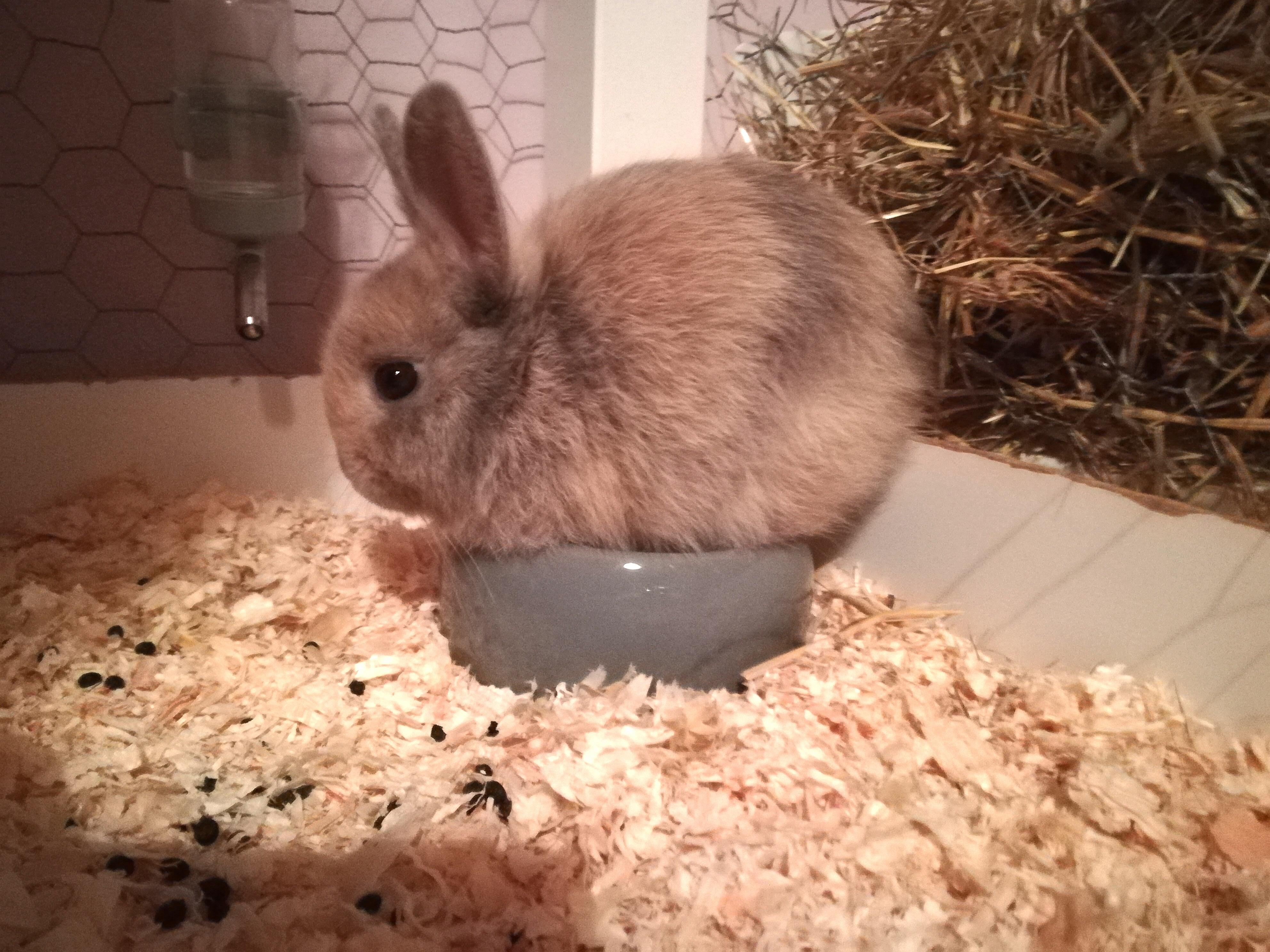 Rabbits | Guide | Omlet UK