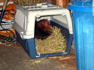 The chickens first attempt at a time travel machine needed a bit of work.