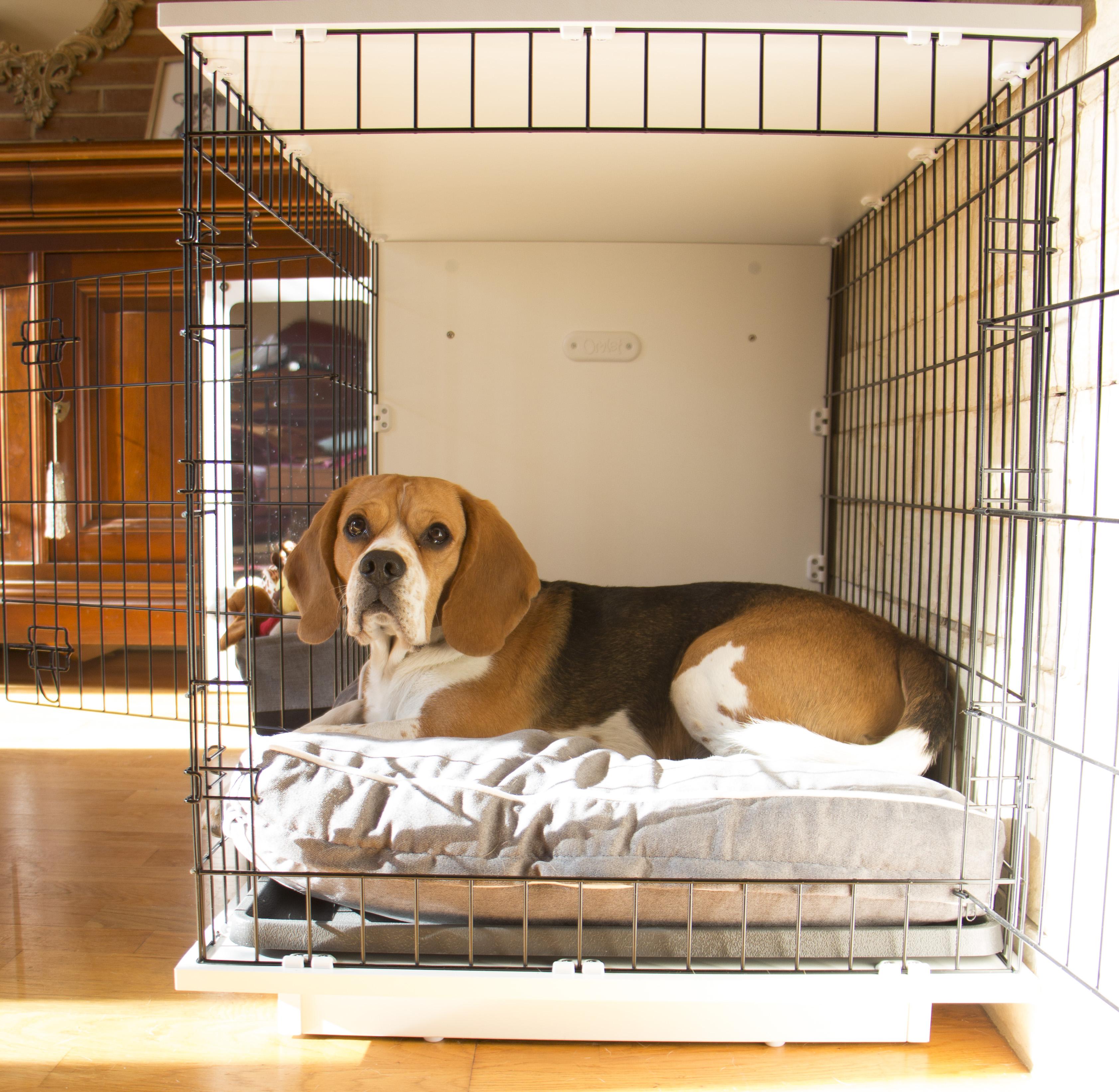 New Fido Studio Dog Crate Dog Products