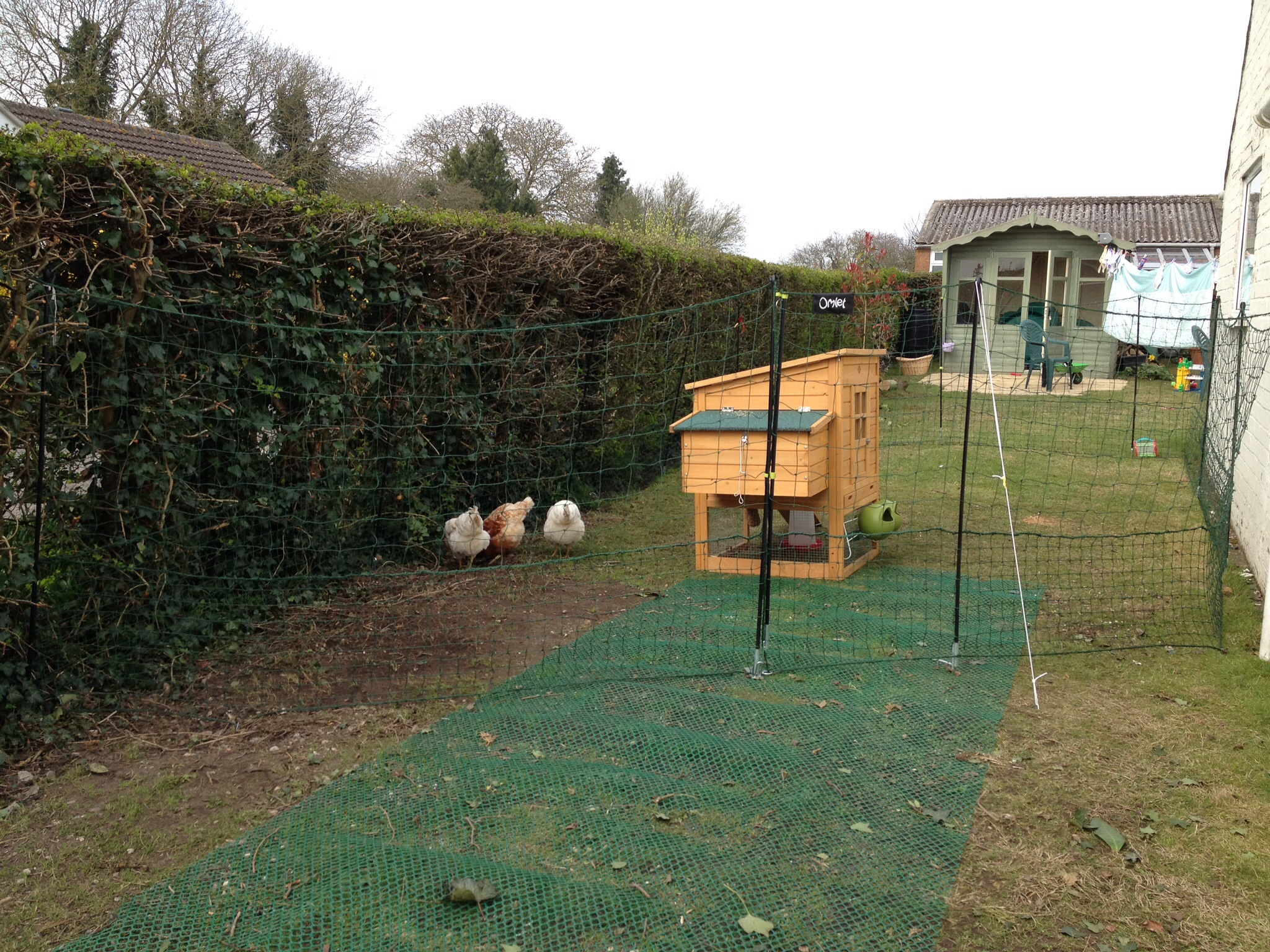 Omlet Chicken Fencing Green Poultry Netting For Chickens