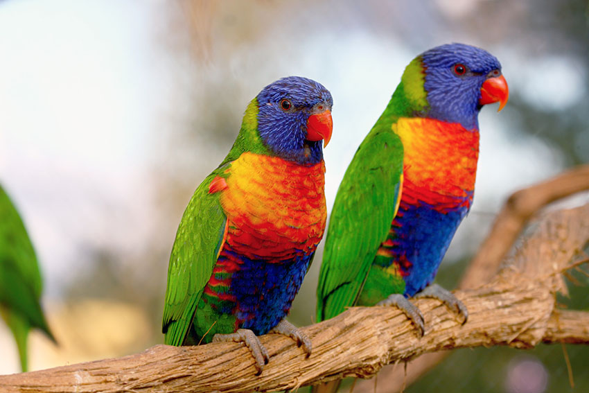 The Different Types Of Parrot Parrots Guide Omlet Uk