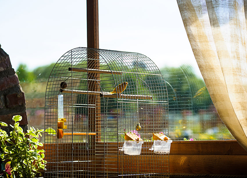 Traditional Canary cage